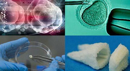 Gli Scienziati hanno Scoperto come far Crescere Nuovi Denti da Zero.