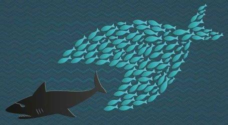 Pesce Grande Mangia Pesce Piccolo e Greta li Mangia Tutti