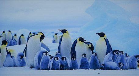 Catastrofico Insuccesso Riproduttivo nella Seconda più Grande Colonia di Pinguini Imperatore del Mondo
