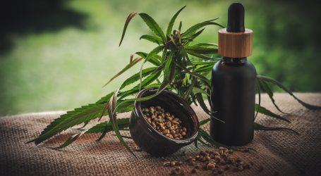 Cannabis: L'erba Medica che Guarisce