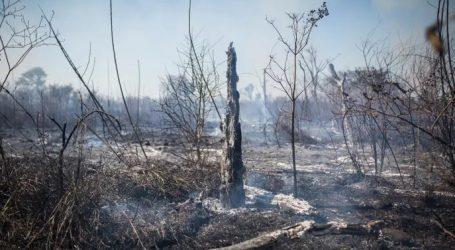 Argentina: Gran Chaco  Un Immane Tragedia Ambientale