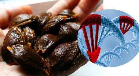 Vitamina B17: La Grande Censura Mediatica sul Cancro