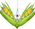 GMO Vaccine COVID and GMO crops What you Haven't Figured out Yet