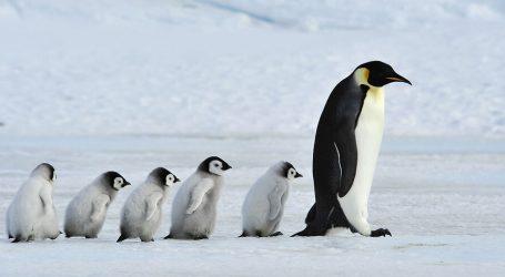 L'Antartide si è Raffreddata e Non Riscaldata Negli Ultimi 40 anni